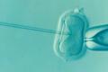 Inseminazione in vitro: licenziata